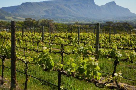 Flexible hydraulique pour la viniculture | GF Hydro